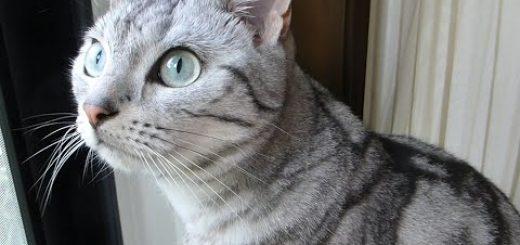 「セミを逃がすなんて許せない!」とプンプンする猫