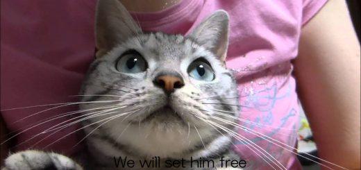 カミキリムシの反撃!あまりの痛さに「わん!」と泣いた猫