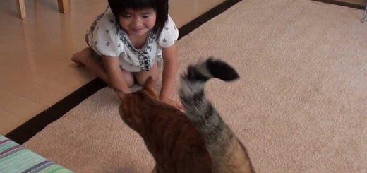 とっても仲良し♪子供と楽しそうに追いかけっこをする猫