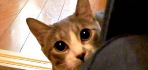 猫の本気を見せてあげるにゃ!だーるまさんが転んニャ!