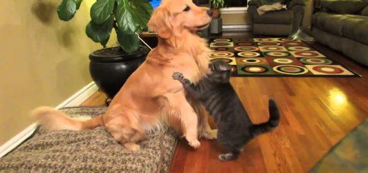 ストレートな愛情表現!犬にハグする猫と大喜びな犬