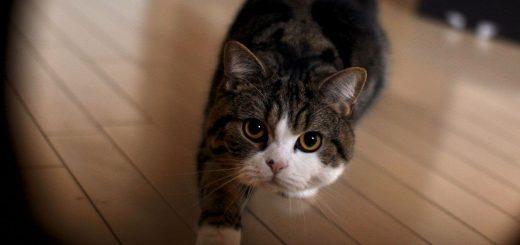 みんなの心をワシ掴み!お茶目で可愛い猫のまるの日常