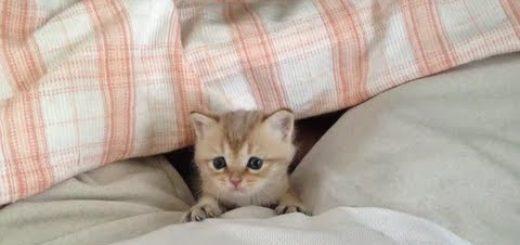 よちよち歩きがたまらない!手のひらサイズの赤ちゃん子猫
