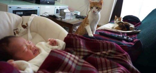「この小さな生き物は何だ??」初めて対面する赤ちゃんに興味深々の猫