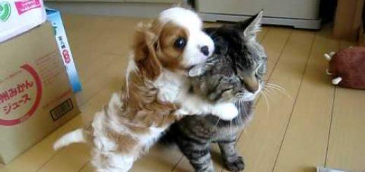 我慢、我慢…。子犬の熱烈な愛情表現に忍耐強く耐える猫