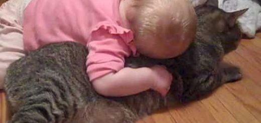 もうどうにでもして~。外国の赤ちゃんが猫をぎゅっ!