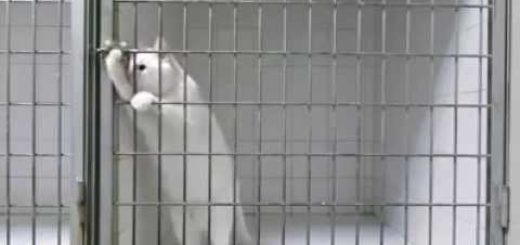 どんな鍵でも手一つで開けられる超賢い白猫