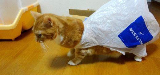 イライラッ…!スーパーの袋がお尻から取れなくなって苛立つ猫