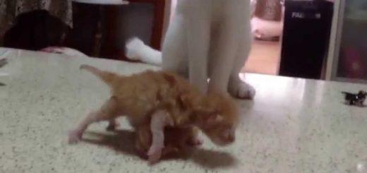 どう接していいか分からない!初めての子守に苦悩する猫