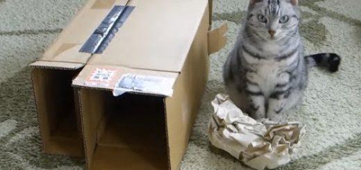 この遊びに飽きましたと訴える猫