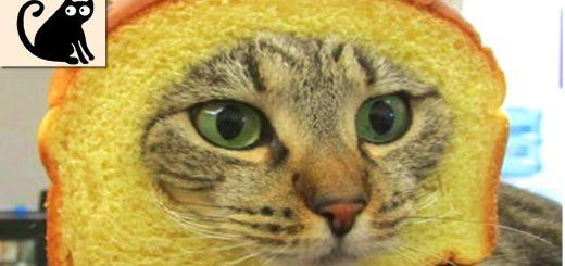 背中を撫でられると顔が引きつって何故かぺろぺろと 何かを舐めるようなおかしな素振りを魅せる猫ちゃん!