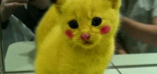 トースターに驚き面白い反応する猫ちゃん!