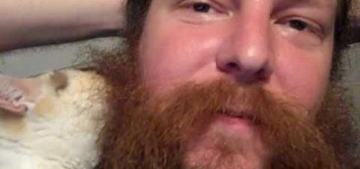 父ちゃんの髭が大好き三毛の猫、愛が昂じて顔が埋もれる