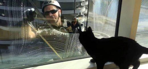 大きくなった黒猫ギネス、窓拭きおじさんたちはマブダチ