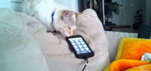 子猫の声で鳴き出すスマホ、咥えて連れて寝床まで