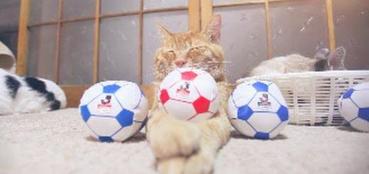 のせ猫イレブン無言でサポート、サッカーボールを頭に載せて
