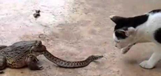 猫の相手は合体怪獣、ヘビの背後に潜むラスボス