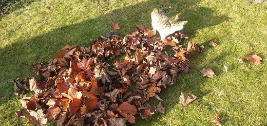 紅葉の山に戯むる猫たち、秋の訪れ伝える音色