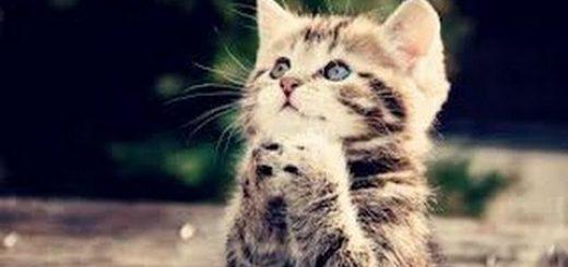 ランニングマシーンと格闘する二匹の猫ちゃん動く床に なにお思ったのか猫パンチをおみまい