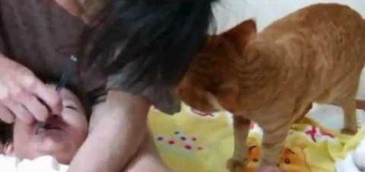 泣き叫ぶ子どもを守る茶トラ猫、止めてあげなと袖を咥えて