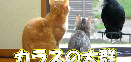 家の中から外のカラスの様子を真剣にうかがう猫ちゃん達