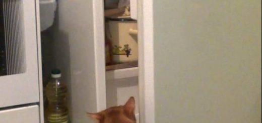 猫の手で開いて覗いて冷蔵庫、無言で振り向く鋭い眼光