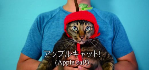 PPAP猫が登場、ペンの代わりに猫が合体