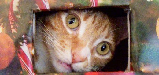 猫と人のお互いの幸せのために、猫の遊び場をクリスマスツリー化