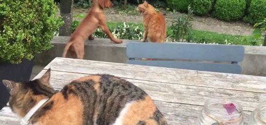 猫犬の喧嘩を見ていた猫が参戦、助太刀したのは犬の側