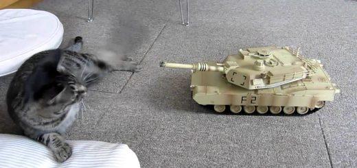 高速パンチと戦車の戦い、お互い譲らず前線膠着