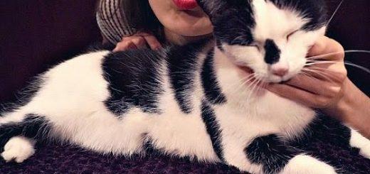 重低音と甘え声、二匹の猫による高音質のゴロゴロ音