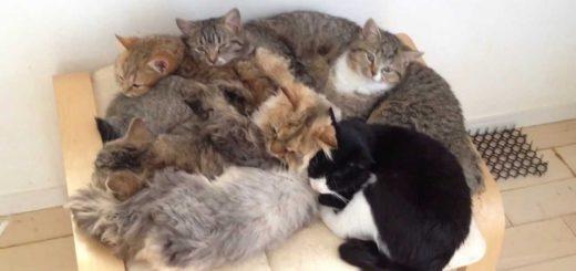 暖を求めて猫6匹、行き着く先は同じ場所