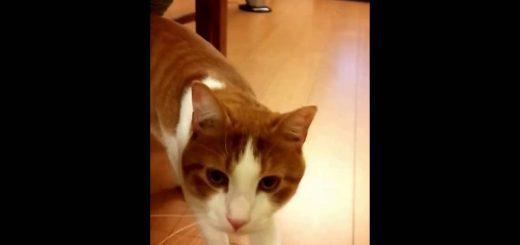 猫バンバンの必要性を再認識させる、子猫救出動画とその後