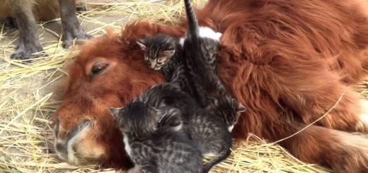 寝そべる馬に寝そべる子猫、周囲で見守る保護者とカピバラ