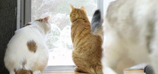 雪を見つめる猫三匹、背中が語る浮き立つ心