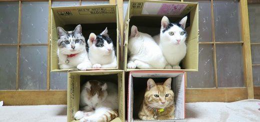 箱は4つに猫は6匹、軽量紙製猫マンション