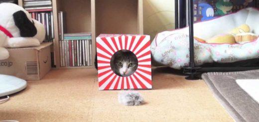 今年も猫が日本を照らす、初日の出っぽい箱芸で