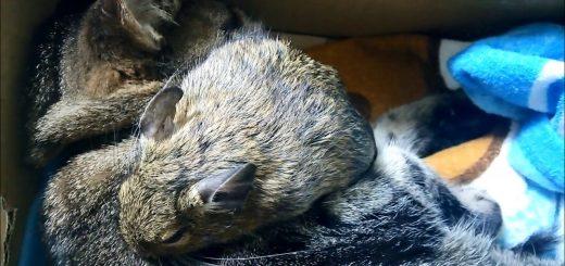 天然毛でぬくぬく熟睡、猫とデグーの掛け敷き布団