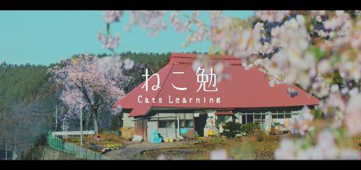 2017年も2/22は猫の日祭り!各所の猫祭りまとめ【追記あり】