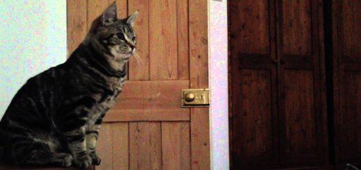 猫の目覚まし時間は正確、狙い定めてジャンピング