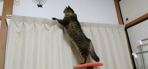 シッポを振り振り時計を見る猫、振り子の猫に吸い寄せられて