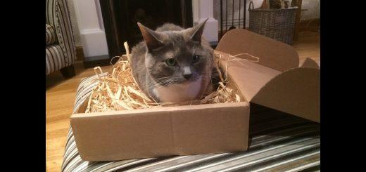快適な寝床でグースカ眠る猫、うらやむ隣人に起こされる