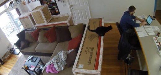 忍び足背後に近づく黒い猫、確定申告準備を阻む