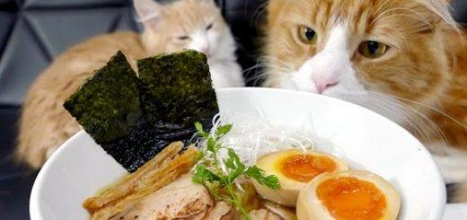 見終えると今日のランチはラーメンに、不思議と決まる猫動画