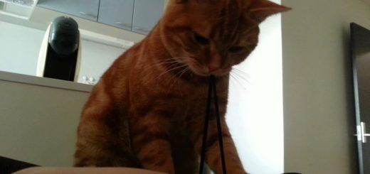 飼い主を器用に起こす猫アラーム、その技の名はゴムパッチン
