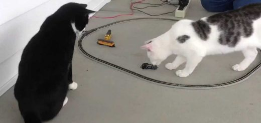 目の前を通るアイツは必ず倒す、守備力高い白黒猫