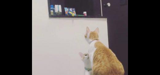 オモチャが取れない猫の弟、姉ちゃん頼って願いを叶える