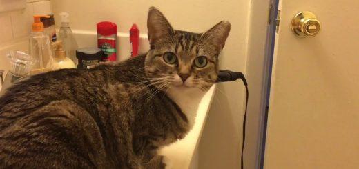 猫ご飯の符帳になったあの単語、聞こえた瞬間顔が真面目に