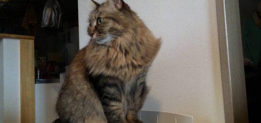 空気清浄機に乗った猫、爽やかな風に満足げな顔