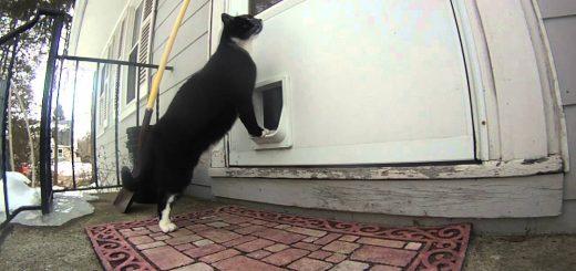家に入れてと訴える猫、律義に鳴らすドアのチャイムを